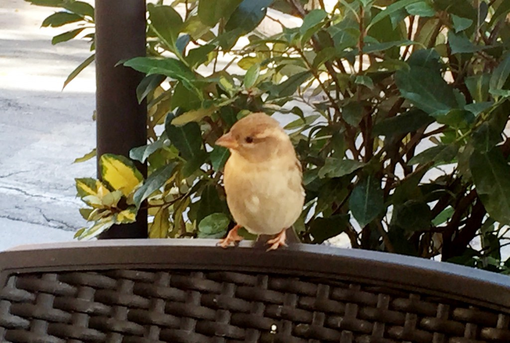 Lilla Fröken Fågel.